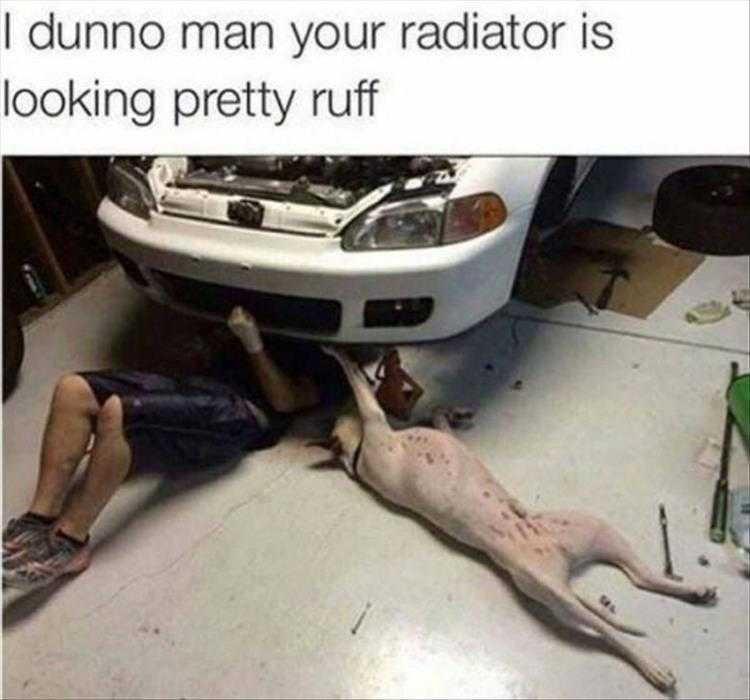 Animals Being Funny Pictures - Mechanics Best Friend