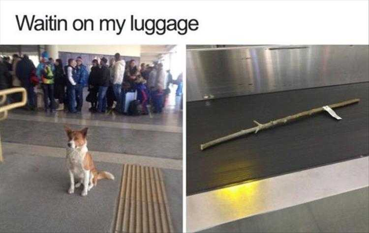 Animals Being Funny Pictures - Had To Check In That Oversize Luggage