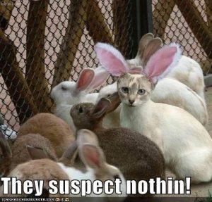 Funny Animal Easter Memes