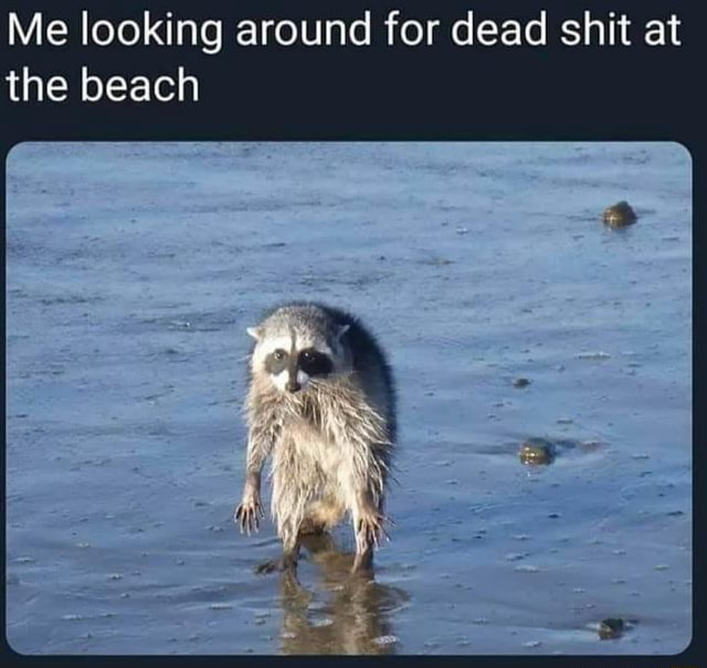 Beach Memes - give it to me