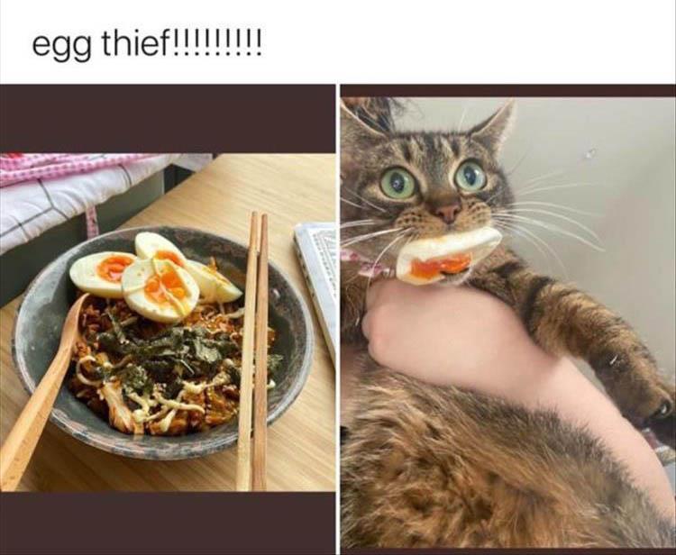Funny Animal Pics with Sayings