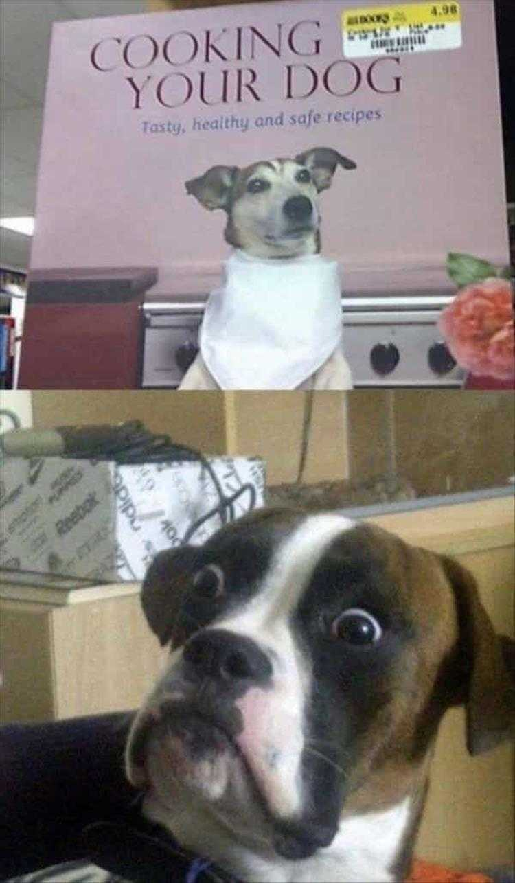 Hilarious Animal Pictures with Quotes