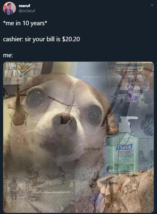 Best Chihuahua Memes