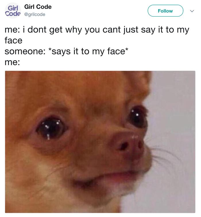 Funny Chihuahua Memes