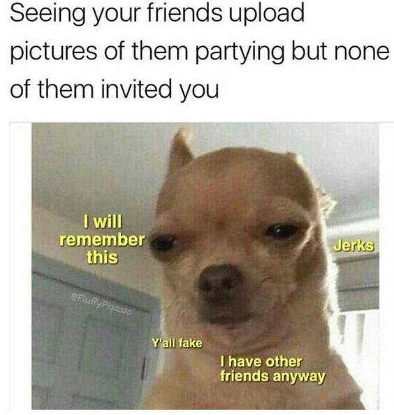 Chihuahua Memes Funny AF