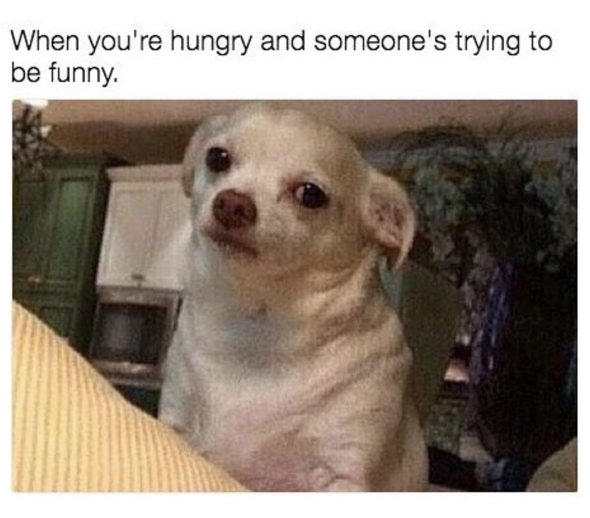 Funny AF Chihuahua Memes