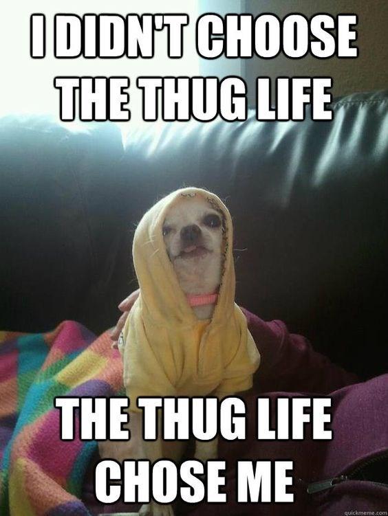 Chihuahua Memes Relatable
