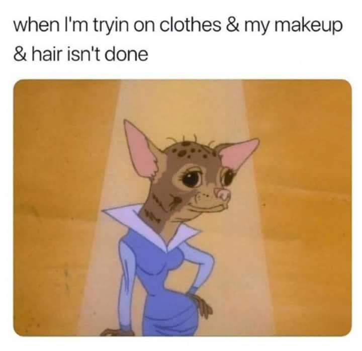 Relatable Chihuahua Memes