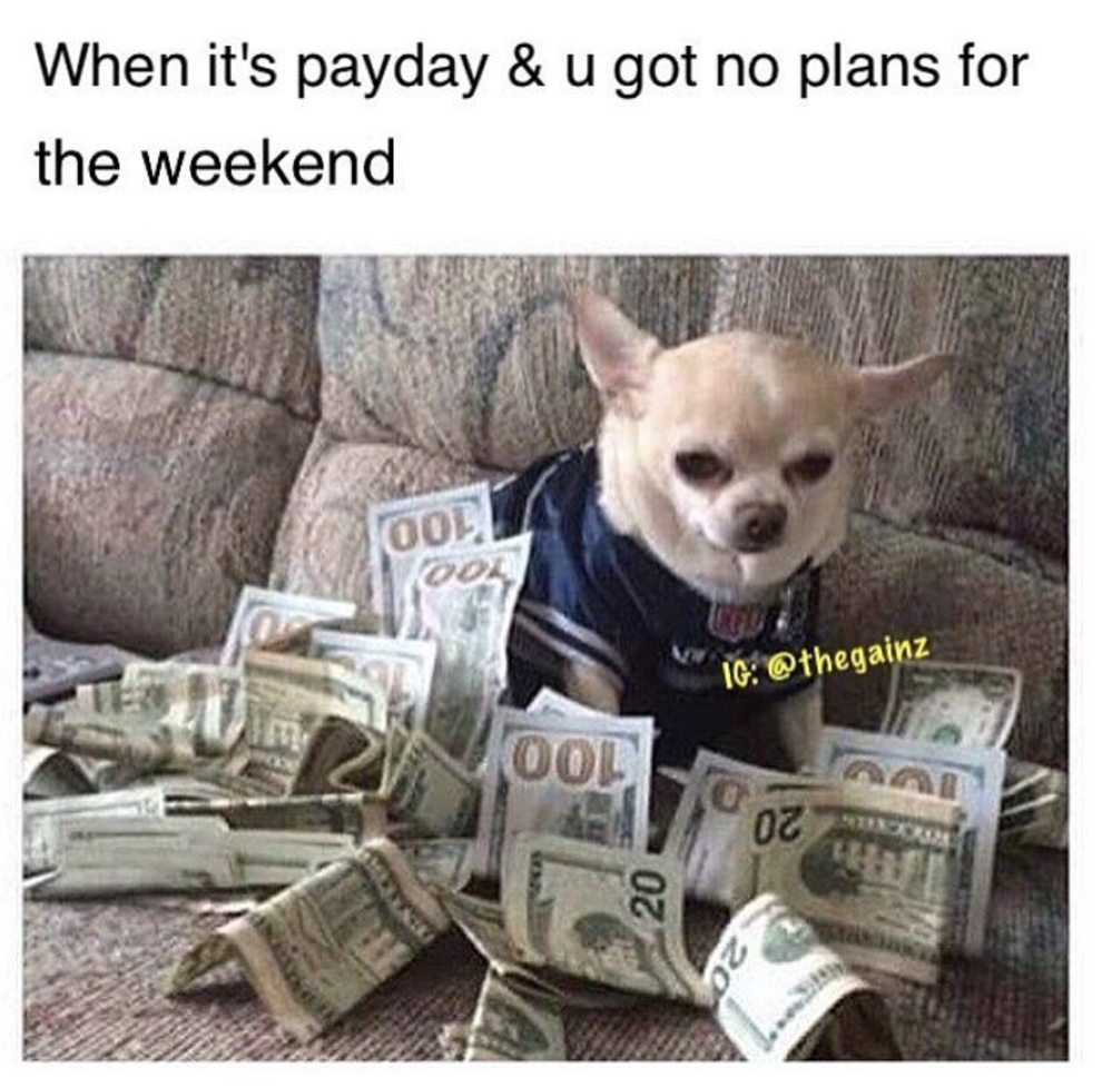 Chihuahua Memes Adorable