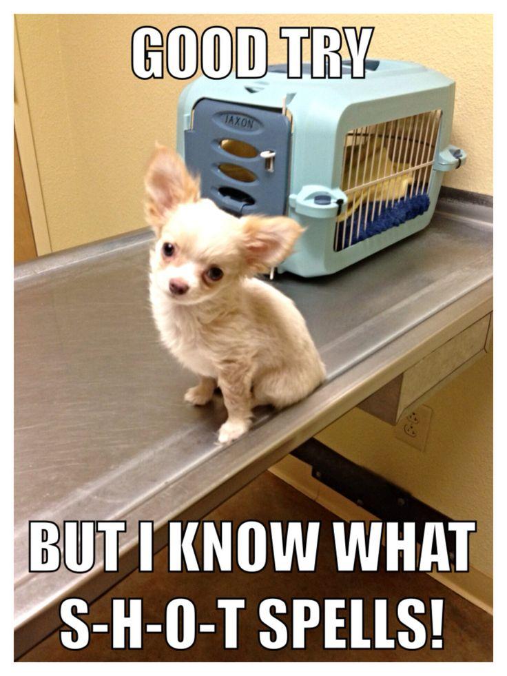 Cute Chihuahua Memes
